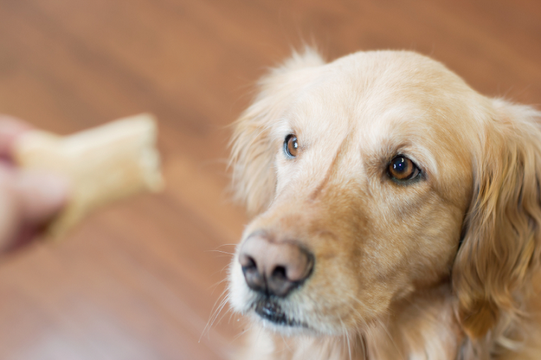 How to Train or Retrain a Dog that is Deaf