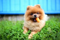 Five Healthy Foods to Add to Your Dog's Diet Today