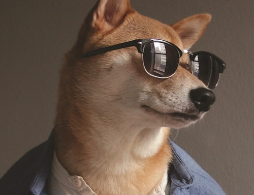 Fashionable Instagram Dogs You Should be Following