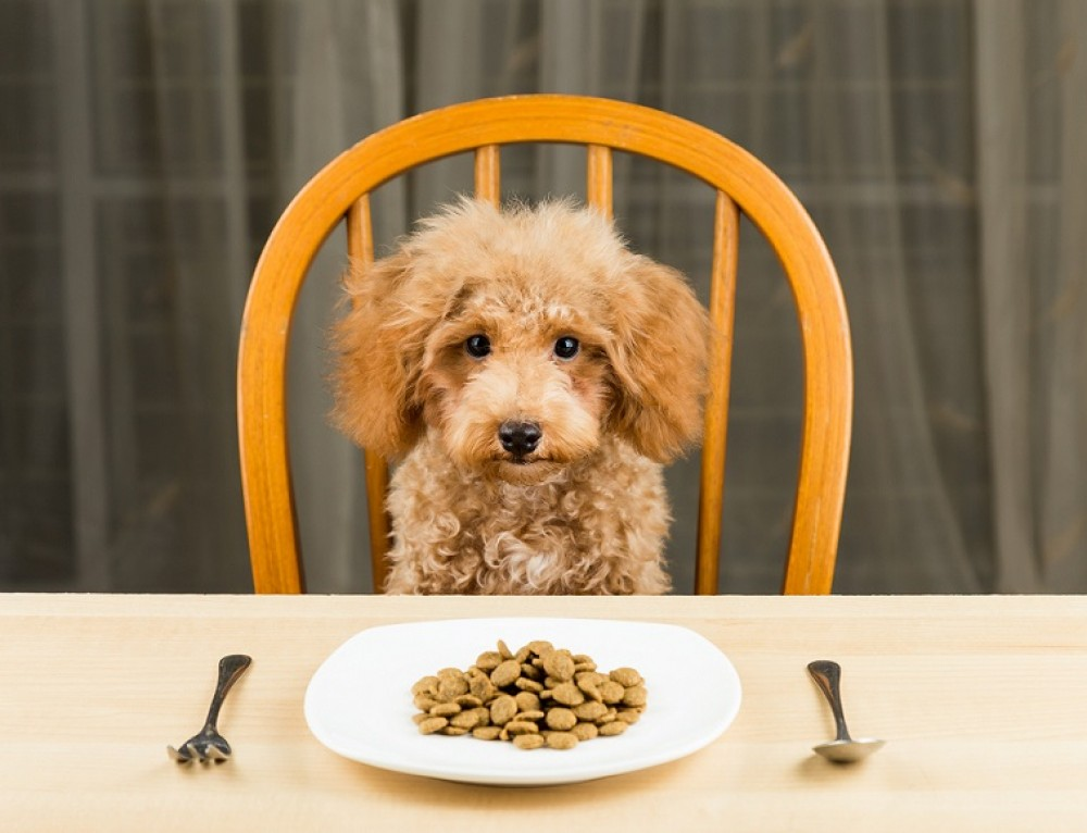 Thanksgiving Dinner for Dogs