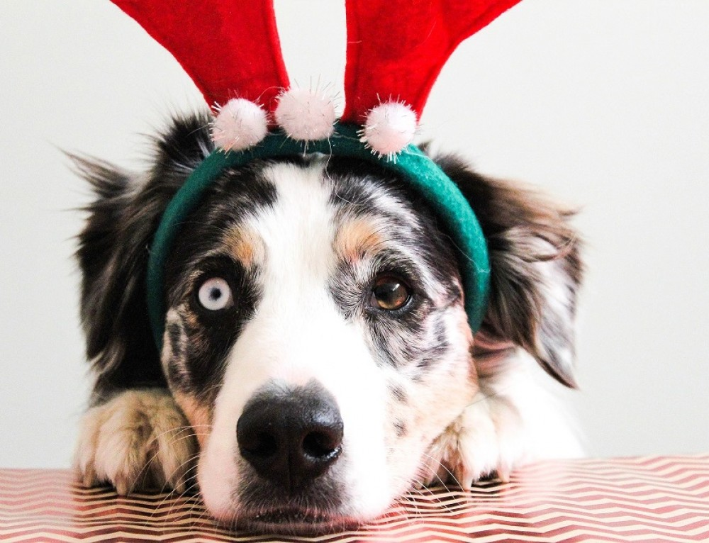 Christmas Outfit Ideas for Your Dog