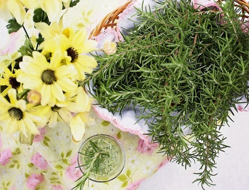 Healthy Herbs for your Dog's Diet