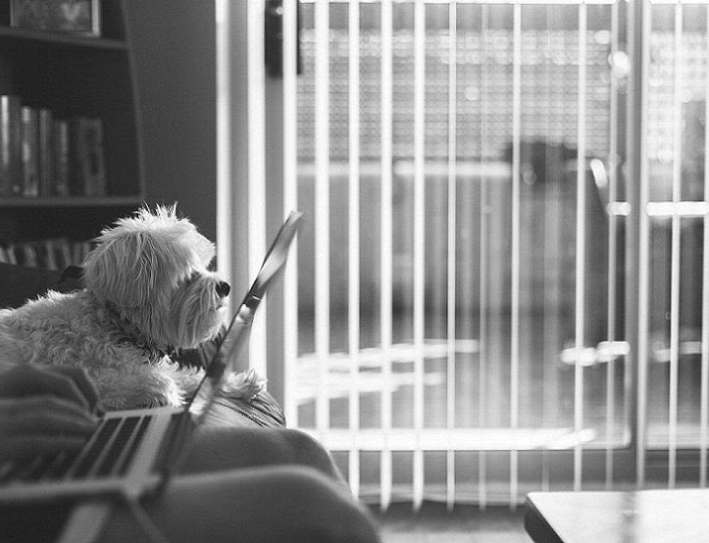 The 10 Best Dog Blogs to Follow Now