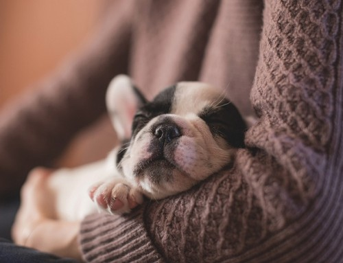 The Puppy Essentials Every New Owner Needs