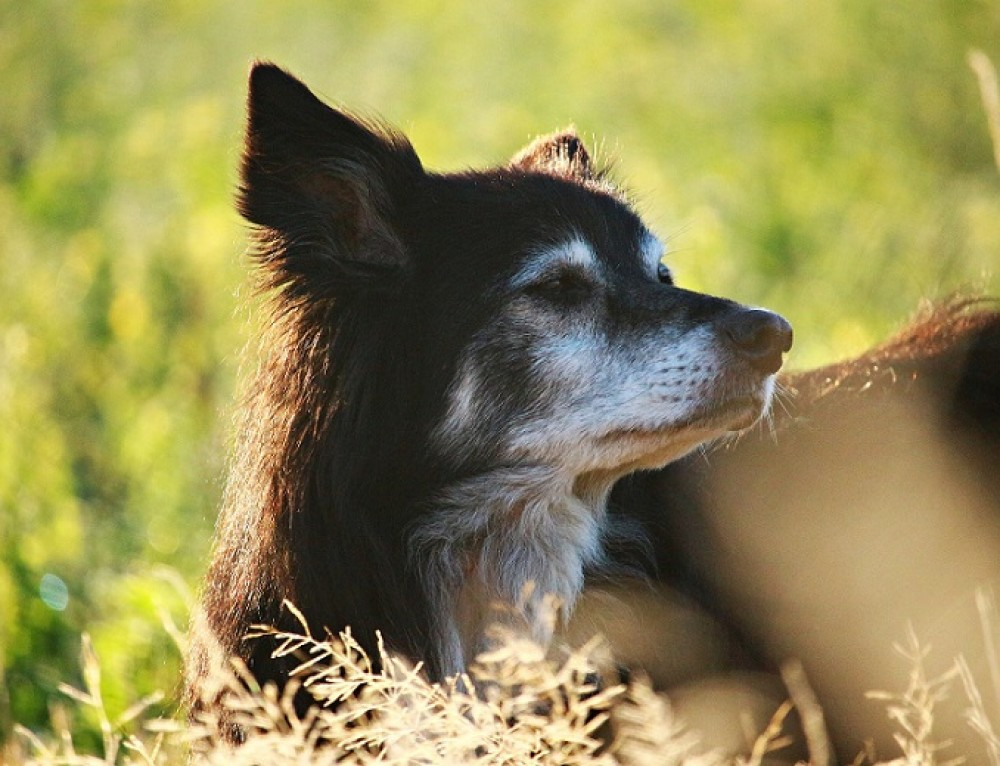 Geriatric Care for Dogs