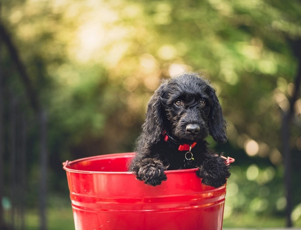 How to Stop your Puppy Peeing Inside