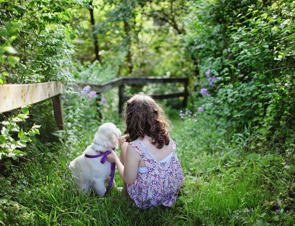 Bringing up Children and Dogs Together, Safely